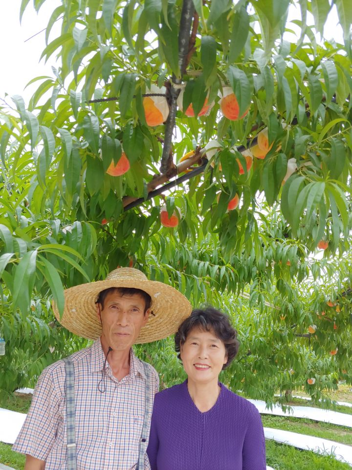 복자네 복숭아 농장지기 사진